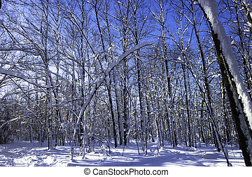 hiver,  scène