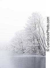 hiver, surgelé, arbres., lake., glacé, brouillard, banque
