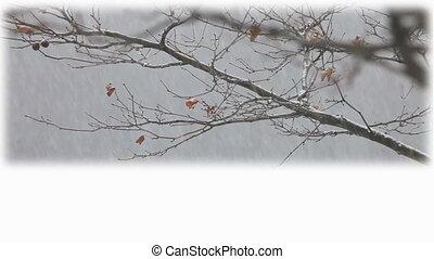 hiver, titre, plaque