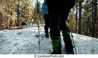 hiver, voyageurs, neige, en mouvement, forêt, par