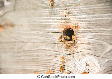 Hives in the apiary with bees flying on the landing boards.