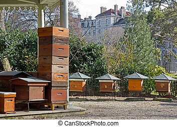 hives in the city Paris France