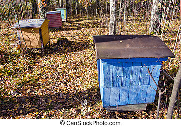 hives in the october forest
