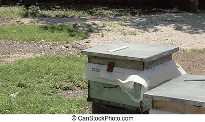 Hives of bees in the apiary, Georgia