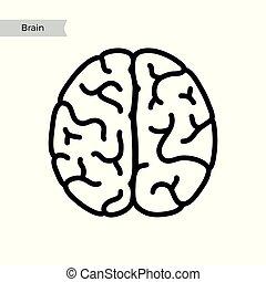 hjärna, anatomi, vektor, mänsklig, illustration