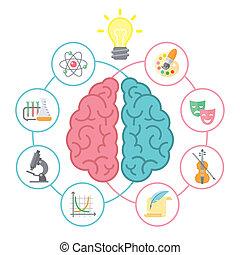 hjärna, begrepp