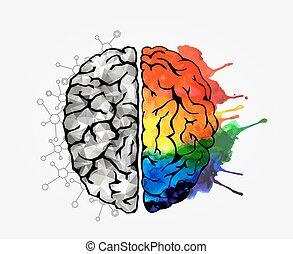 hjärna, begrepp, mänsklig