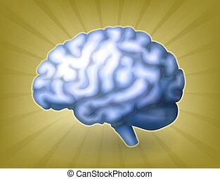 hjärna, eps10, blå, mänsklig
