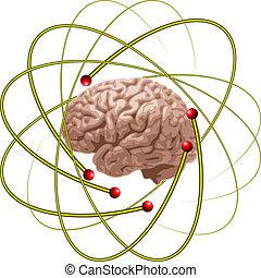 hjärna, forskare