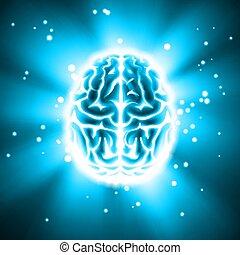 hjärna, glödande, mänsklig