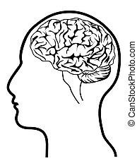 hjärna, huvud, mänsklig