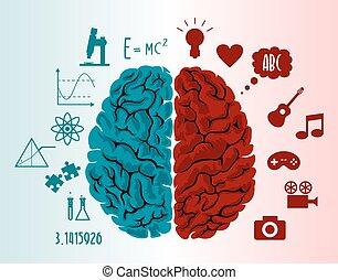 hjärna, illustration, infographics