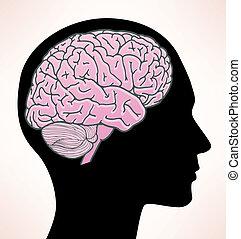 hjärna, illustration, mänsklig