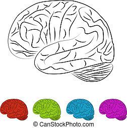 hjärna, illustration