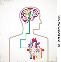 hjärna, infographic, sammanhängande, hjärta