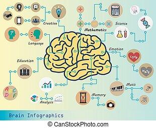 hjärna, infographics