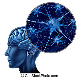 hjärna, läkar symbol, mänsklig