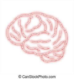 hjärna, mänsklig