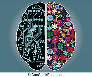 hjärna, rättighet, sida, vänster