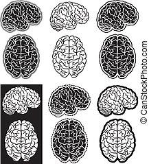 hjärna, sätta