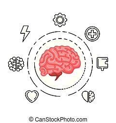 hjärna, sätta, mänsklig, organ, ikonen