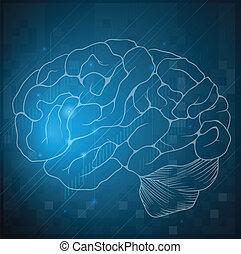 hjärna, skiss, mänsklig