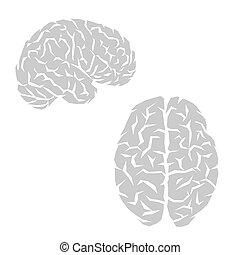 hjärna, skissera, mänsklig