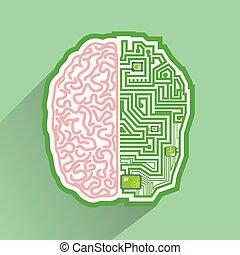 hjärna, strömkrets