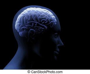 hjärna, transparent