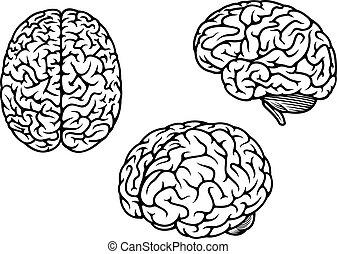 hjärna, tre, mänsklig, flygmaskiner