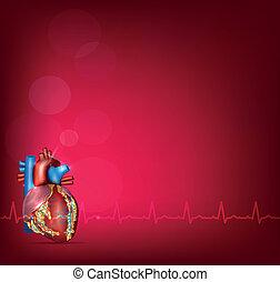 hjärta, bakgrund, anatomi, lysande, mänsklig, röd