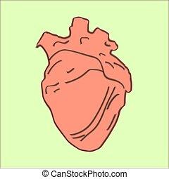 hjärta, bakgrund., illustration, realistisk, vektor, vit