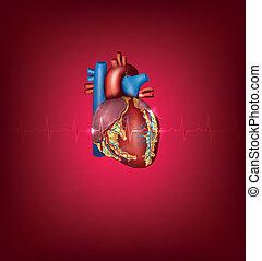 hjärta, bakgrund, läkar illustration, lysande, mänsklig, röd