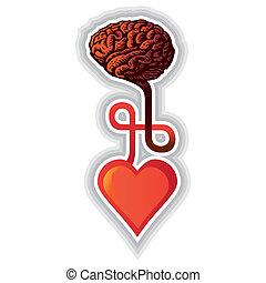 hjärta, -, illustration, hjärna, anslutning, mellan