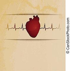 hjärta, kardiogram