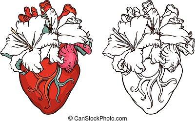 hjärta, liljor, romantisk, concept., blomning, vit, style.