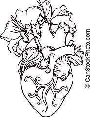 hjärta, liljor, romantisk, drawing., anatomisk, stylized, mänsklig, vit, style.