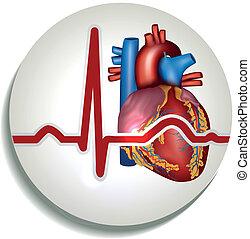 hjärta, mänsklig, rytm, ikon
