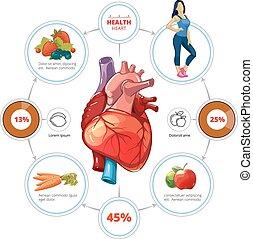 hjärta, medicinsk, vektor, infographics