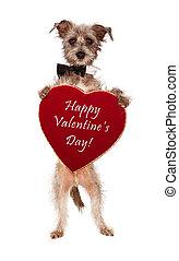 hjärta, valentinkort, hund, holdingen, terrier, dag