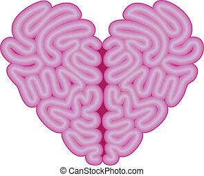 hjärta, vektor, hjärna