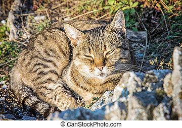 hjemlig kat, ind, natur