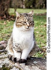 hjemlig kat, poser, ind, udendørs, dyr, portræt