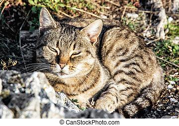 hjemlig kat, poser, ind, udendørs