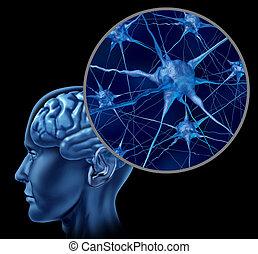 hjerne, neuron, kort