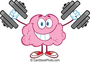 hjerne, oplæring, dumbbells