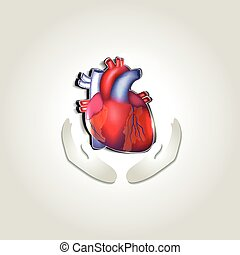 hjerte, symbol, sundhed, menneske, omsorg