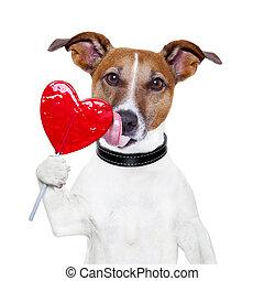 hjerte, valentine, hund, slikke, slikkepind