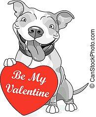 hjerte, valentine, pit tyr