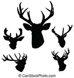 hjort, hjorthorn, silhuett